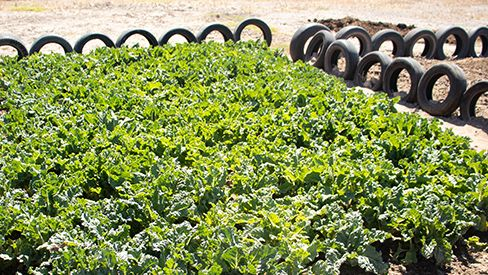 Vegetable garden at the well - Gululethu Township, South Africa