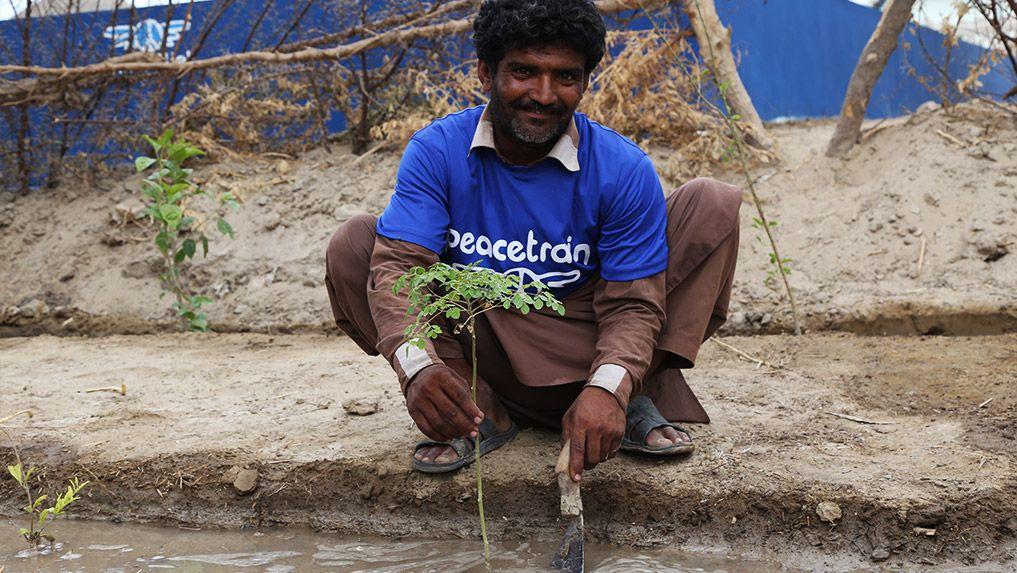 Irrigation using Solar-Well water - Pakistan